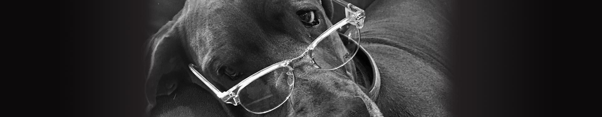 Spectacles West mascot Magnus the Great Dane